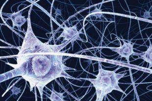 Ant iscobertu unu neurone nou in su cherbeddu umanu.