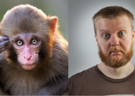 Umanos e martinicas, diferèntzias evolutivas